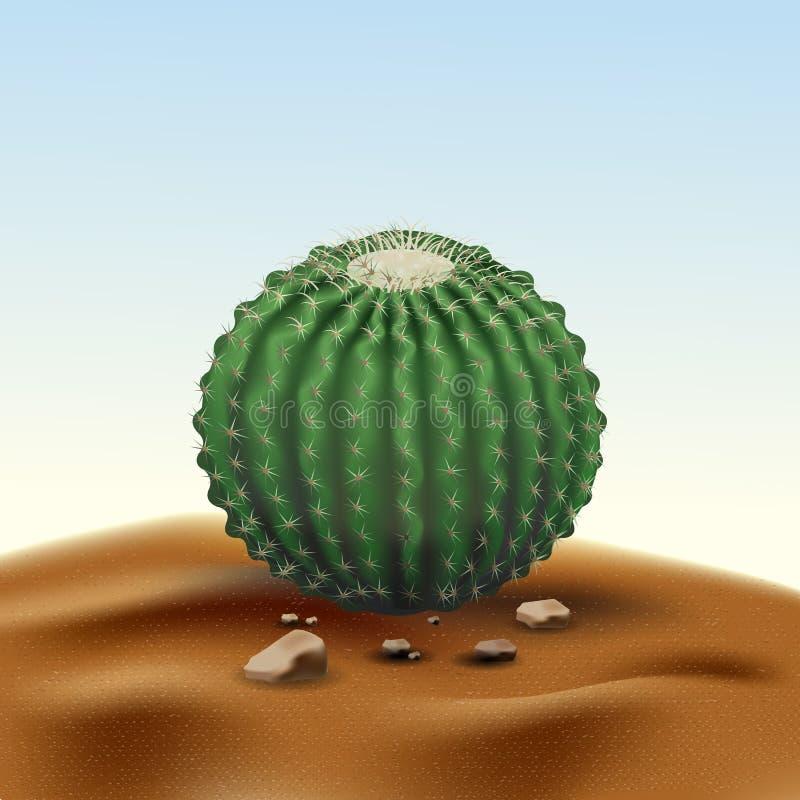 Realistic desert big round cactus Echinocactus. Plant of desert among sand and rocks in habitat. Realistic 3d volume vector stock photos