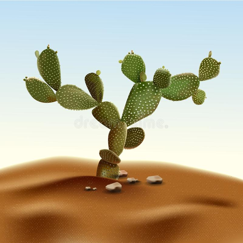 Realistic desert cactus prickly pear. Opuntia plant of desert among sand and rocks in habitat. Realistic 3d volume vector stock illustration