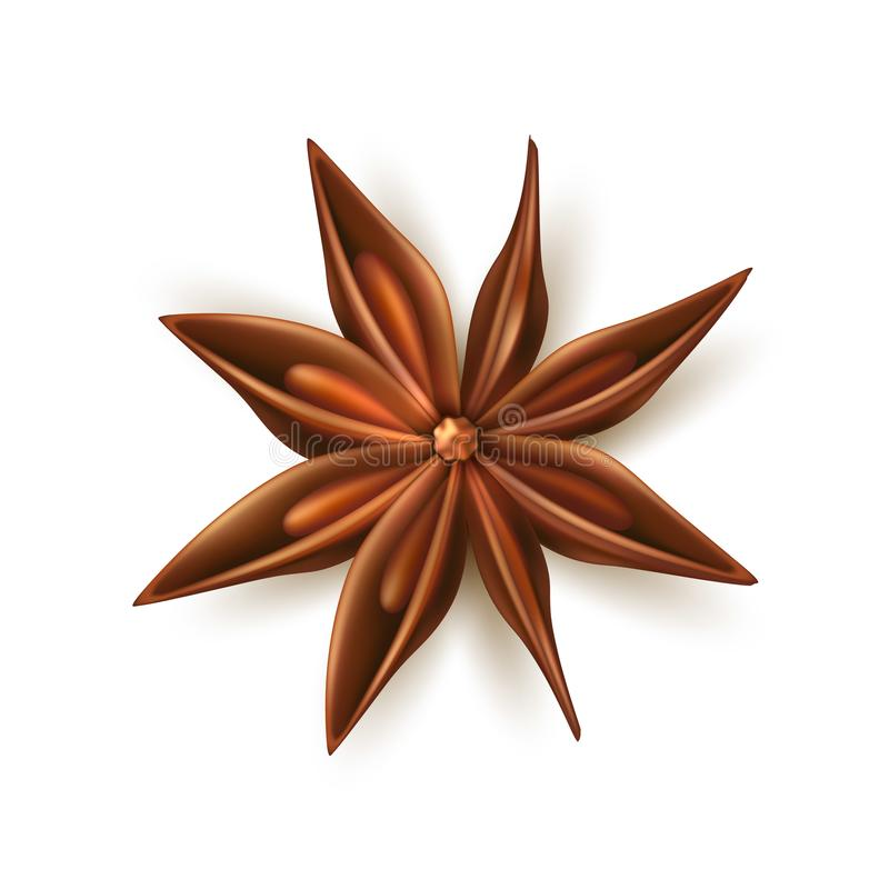 Realistic dried anise star vector with pits. Dried anise star. Realistic seasoning, spice and condement for christmas, winter holiday. Vector herb for culinary royalty free illustration