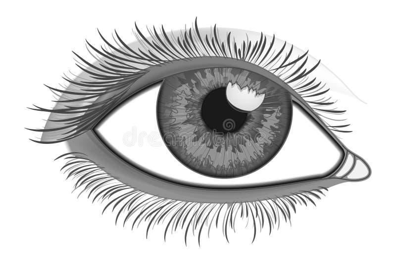 Realistic Eye Close-Up. Eye Close-Up. Realistic Sketch Human Eye in Vector royalty free illustration