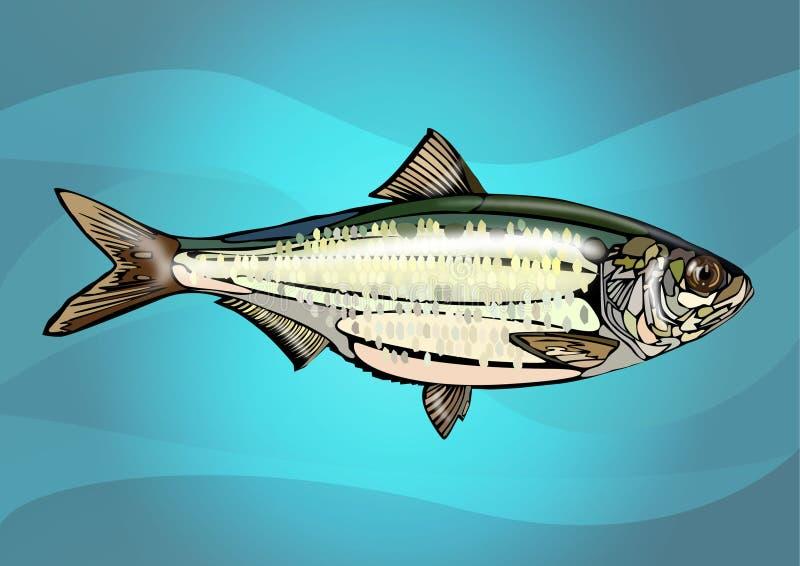 Realistic fish royalty free stock photos