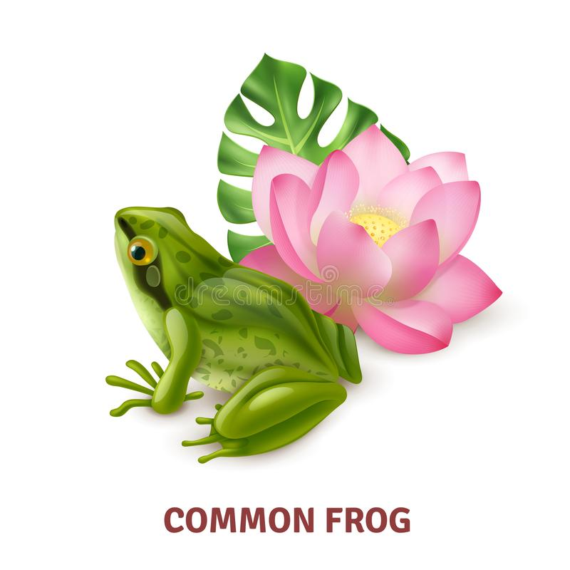 Realistic Frog Image. Adult common frog semi aquatic amphibia realistic closeup side view image with water lily background vector illustration stock illustration