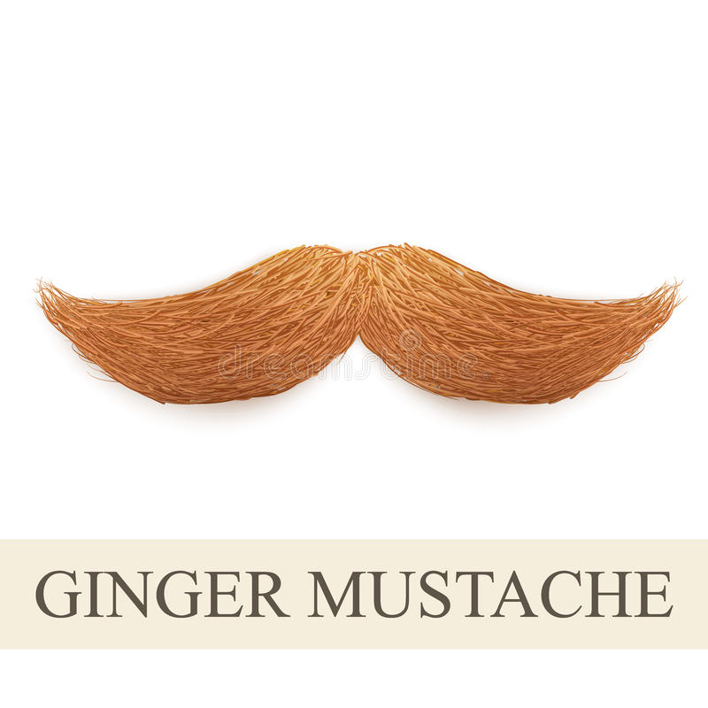 Realistic ginger vintage curly mustache royalty free illustration