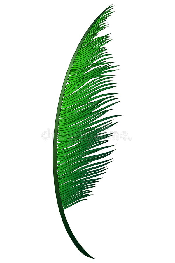 Download Realistic Green Branch Of Tropical Coconut Palm Stock Vector - Illustration of environment, hawaii: 109206951