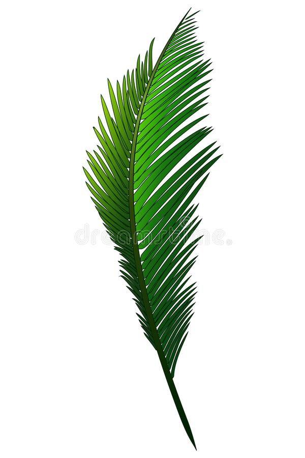 Download Realistic Green Branch Of Tropical Coconut Palm Stock Vector - Illustration of green, leaf: 109207025