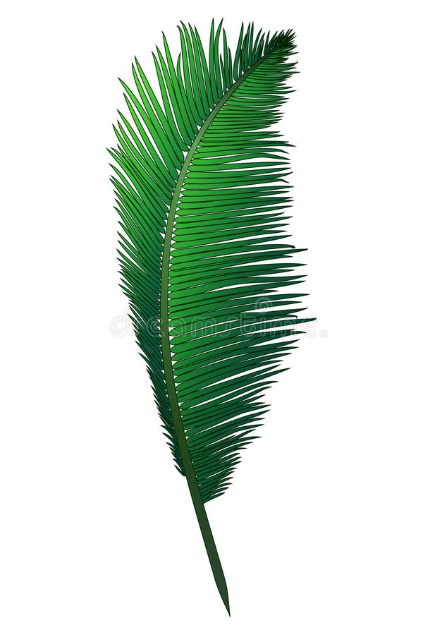 Download Realistic Green Branch Of Tropical Coconut Palm Stock Vector - Illustration of botanical, flora: 109235856