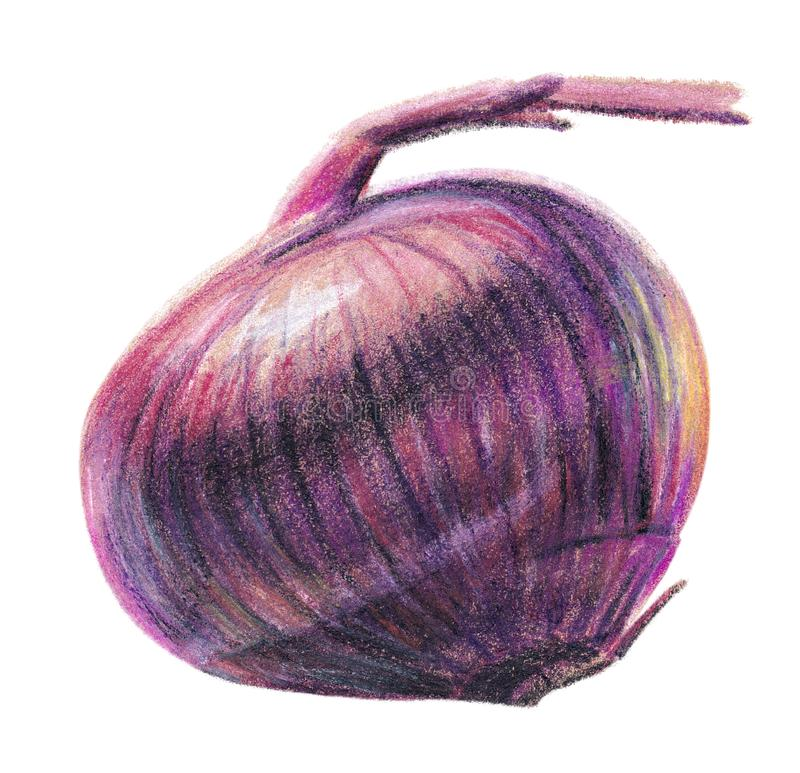 Realistic Hand-Drawn Red onion, Markers, Color Pencils royalty free stock photos