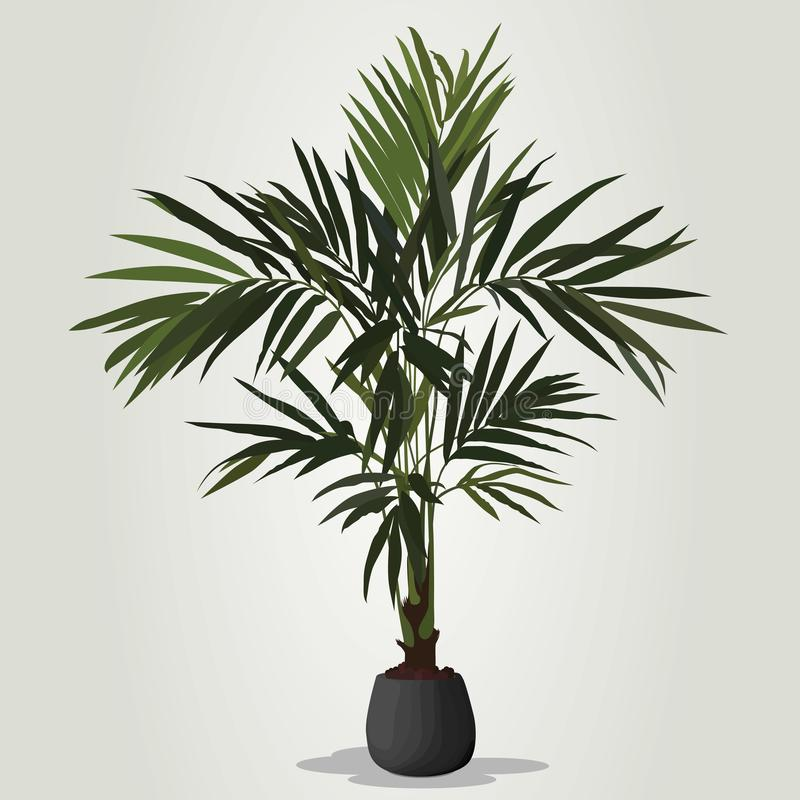 Realistic houseplant vector in bowl isolated on white blackground. royalty free illustration