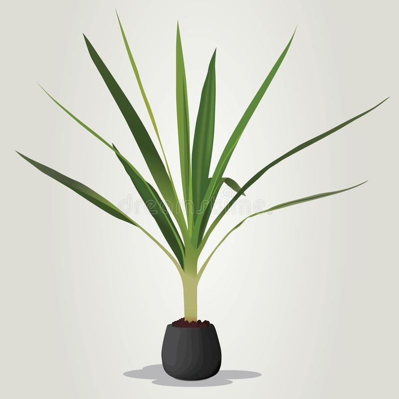 Realistic houseplant vector in bowl royalty free illustration