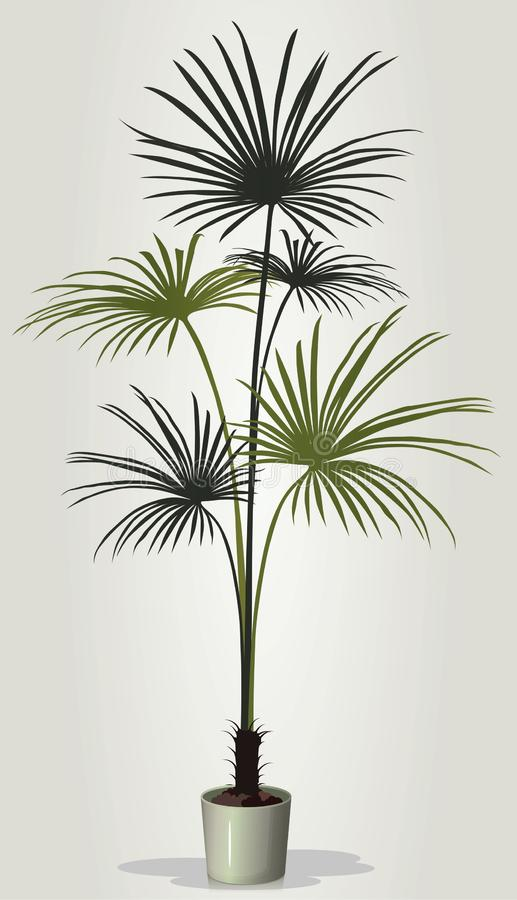 Realistic houseplant vector in white pot vector illustration