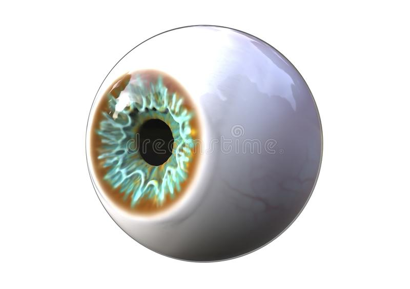Realistic human eye. Looking to the side, 3D illustration vector illustration
