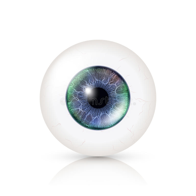 Realistic Human Eyeball. 3d Glossy Photorealistic Eye Detail With Shadow And Reflection. Isolated On White Background royalty free illustration