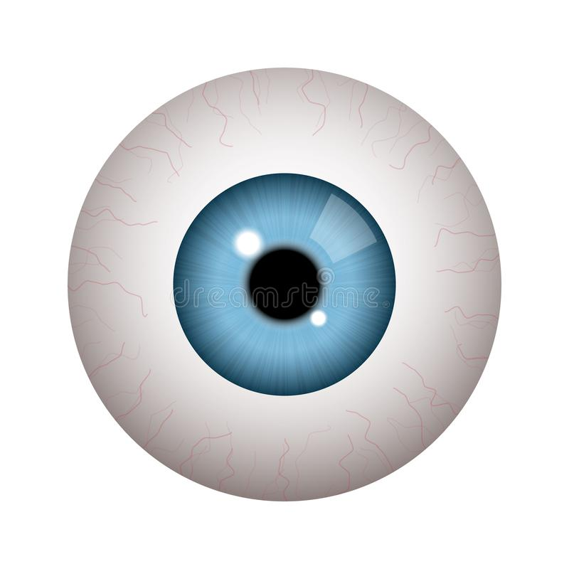 Realistic human eyeball. On white background royalty free illustration