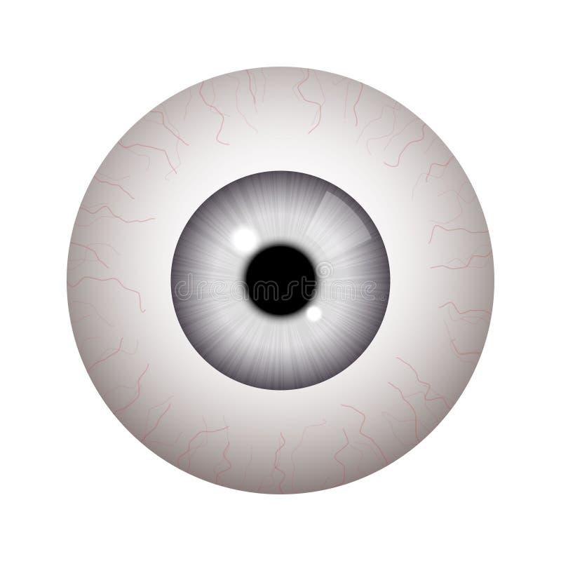 Realistic human eyeball. On white background stock illustration