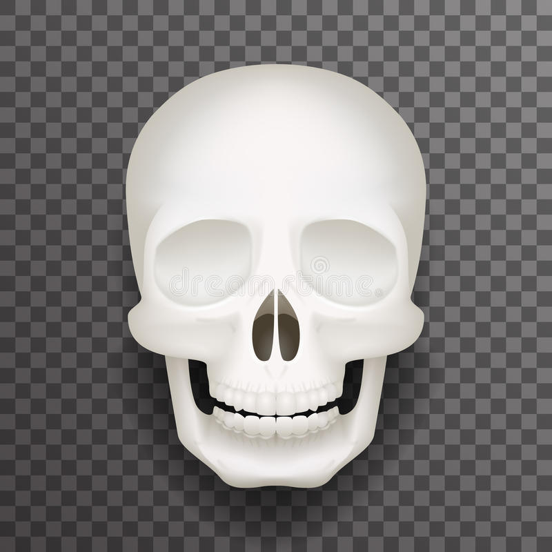 Realistic human skull isolated 3d realistic fashion mockup transparent background design vector illustration royalty free illustration