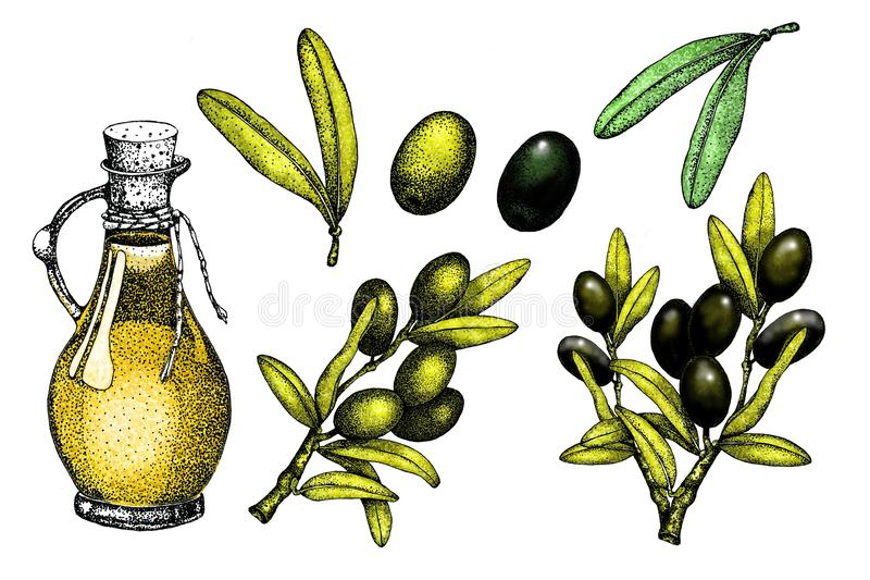 Realistic illustration set of black and green olives branch isolated on green background. Design for olive oil, natural cosmetics royalty free illustration