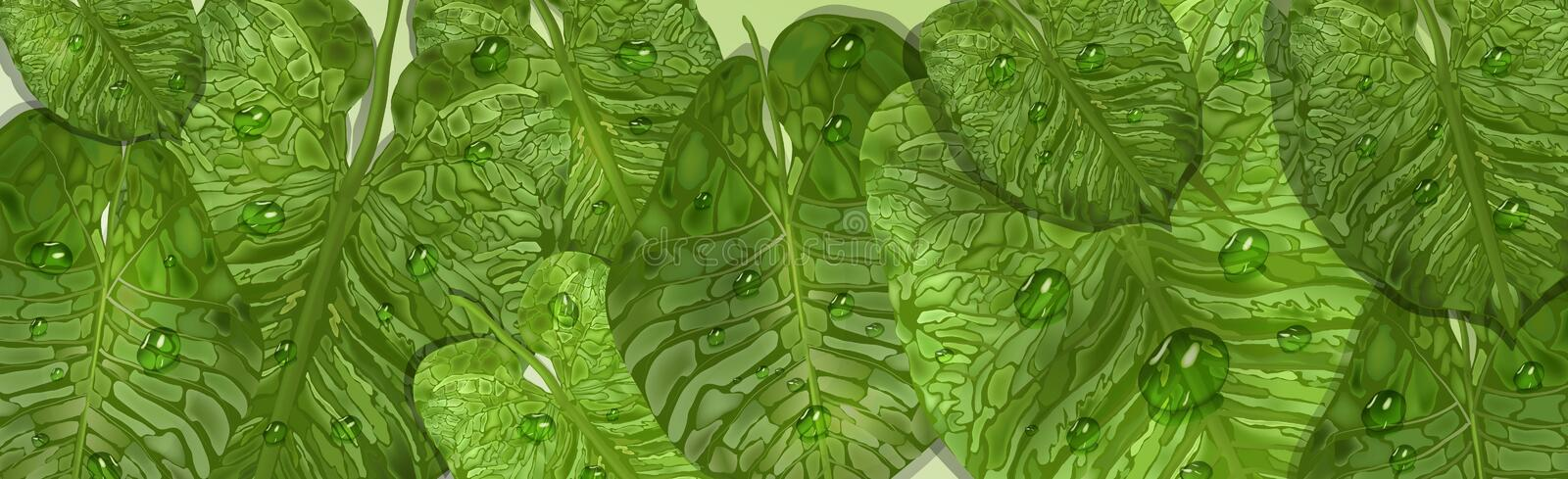 Realistic leaf elements with water drops, dew. vector green leaf background, top view for design. Realistic tropical leaves with dew drops. vector green banner stock illustration