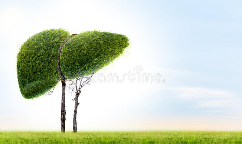 Realistic liver images are human green tree shapes about diseases and cirrhosis environment royalty free illustration