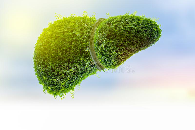 Realistic liver images are human green tree shapes about diseases and cirrhosis environment vector illustration