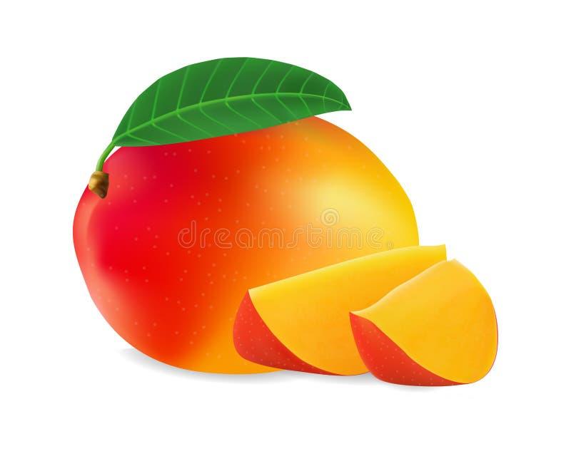 Realistic mango vector iilustration eps 10. Vector mango fruit, 3d realistic isolated on white background, EPS 10 vector illustration