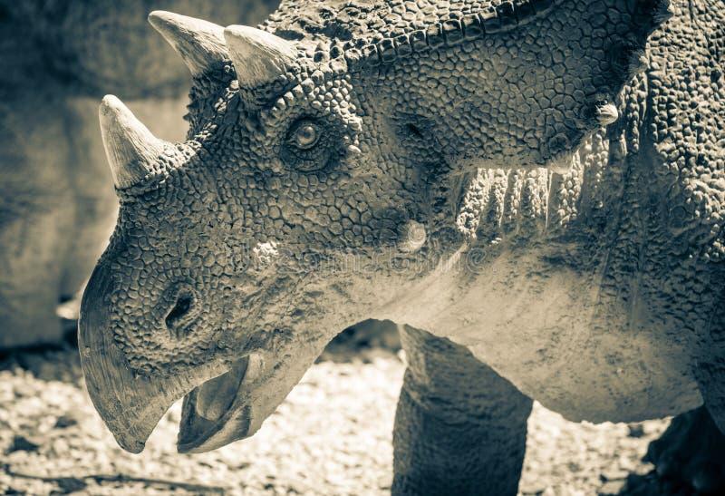Realistic model of dinosaur - Chasmosaurus royalty free stock photo