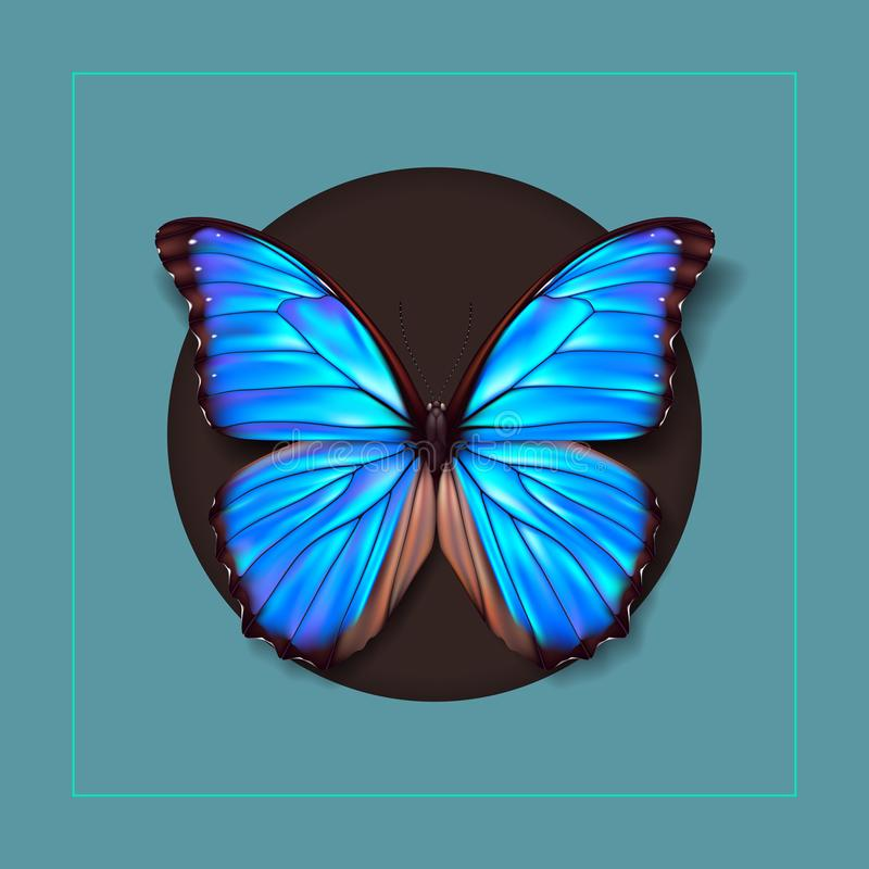 Realistic picture butterfly Morpho Didius. Vector art. Realistic picture butterfly Morpho Didius on green and brown Background. Vector art royalty free illustration