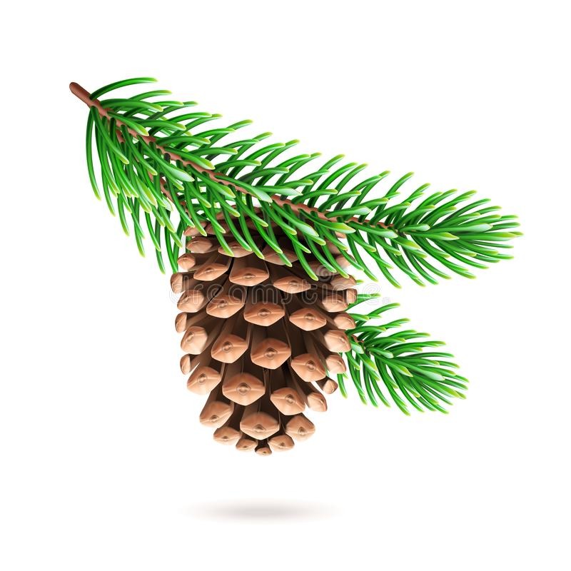 Free Realistic Pine Cone At Fir Tree Branch Stock Photos - 130076603