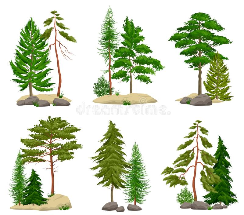 Realistic Pine Forest Elements Set stock illustration