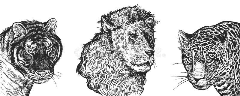 Realistic portrait of African animals Lion, Tiger and Jaguar. Vi stock illustration
