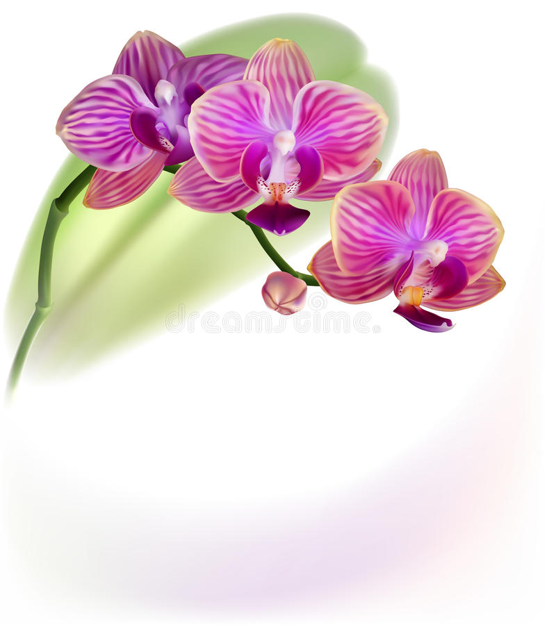 Download Realistic Purple Orchid Flower Stock Vector - Image: 18272876