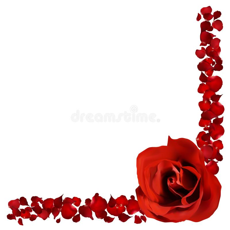 realistic red rose and petals border, flower vector illustration royalty free illustration