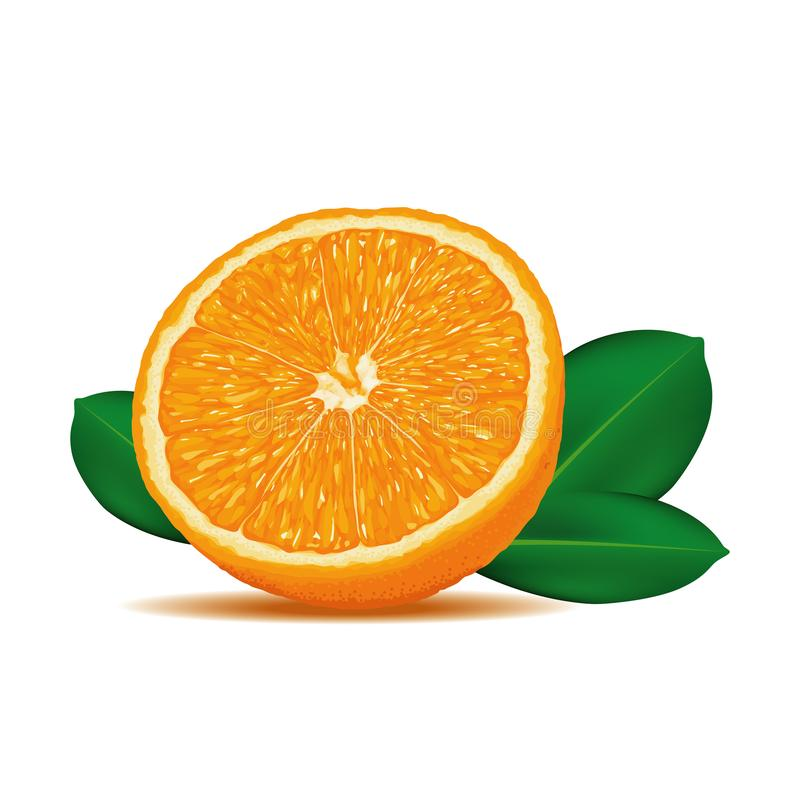 Realistic Ripe and Fresh Orange Cut Vector on iSolated White Background stock images