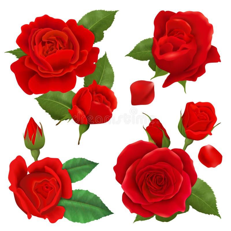Realistic Rose Flower Icon Set vector illustration