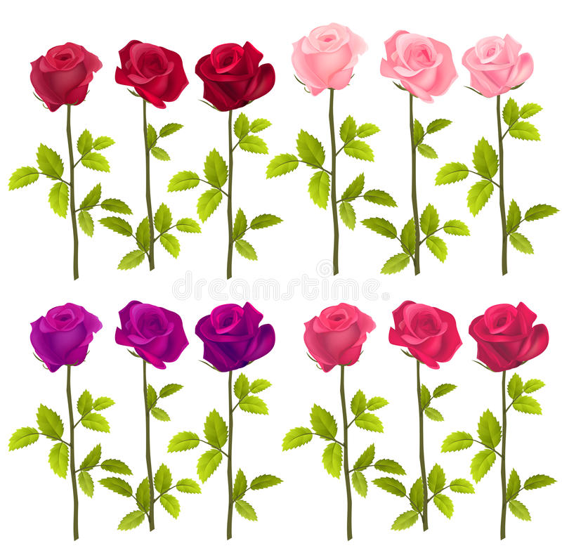 Realistic roses isolated on white. Vector vector illustration