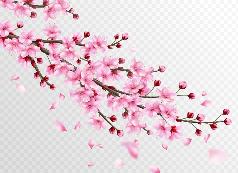 Realistic sakura. Beautiful sakura branches with pink flowers and falling petals, romantic floral japanese cherry vector illustration