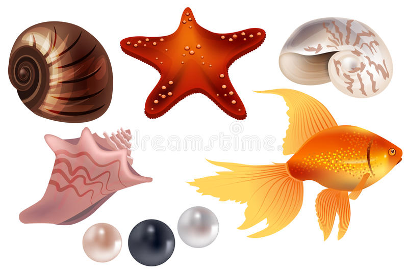 Realistic set with sea shells. Realistic set with detailed sea shells, pearls and fish vector illustration