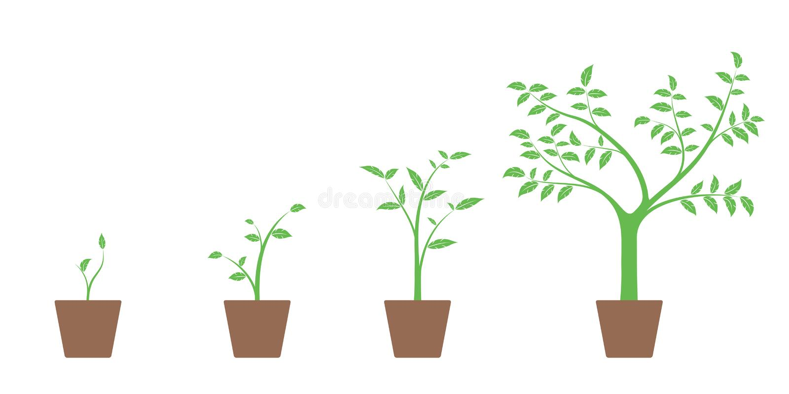 Realistic set of vector illustrations of growth phases of green plant and tree in pot, vector illustration