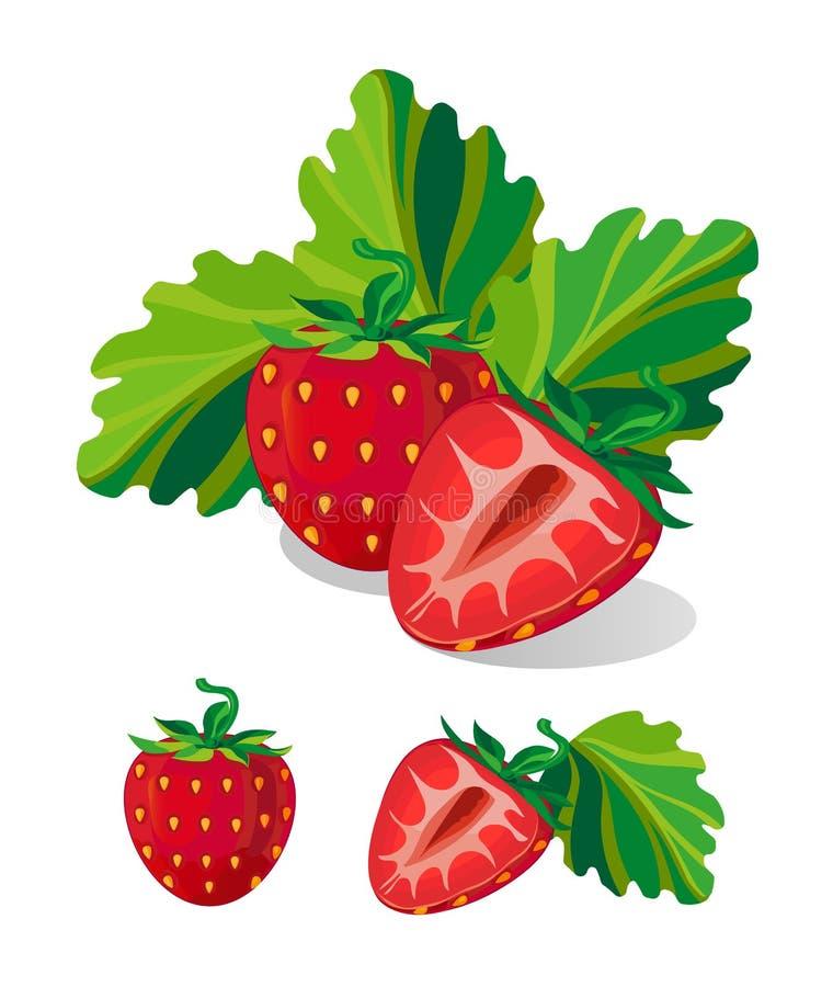 Realistic strawberry. Vector Illustration stock image