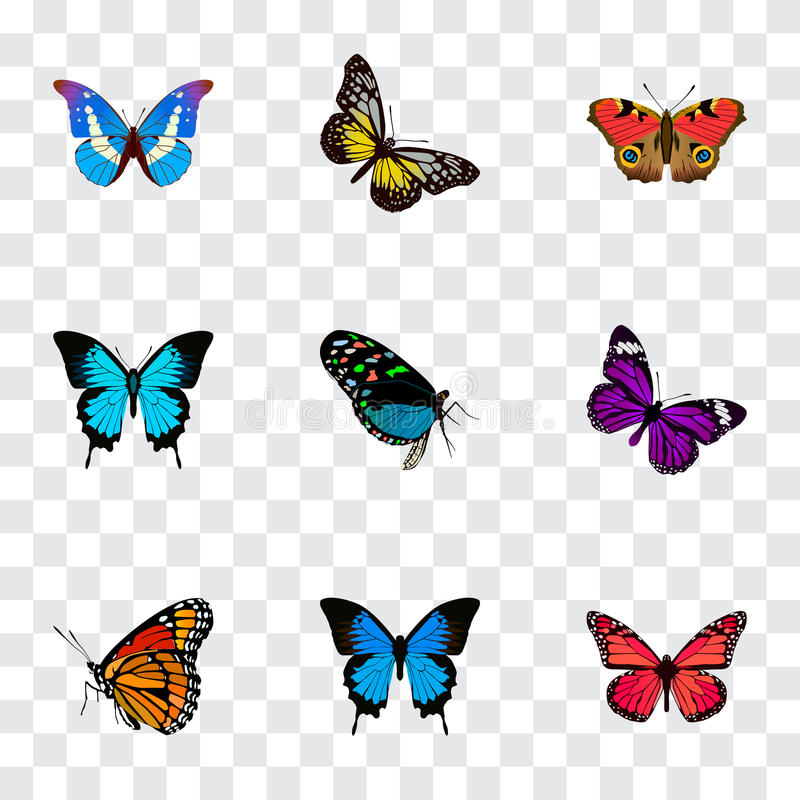 Realistic Summer Insect, Papilio Ulysses, Bluewing And Other Vector Elements. Set Of Beauty Realistic Symbols Also royalty free illustration