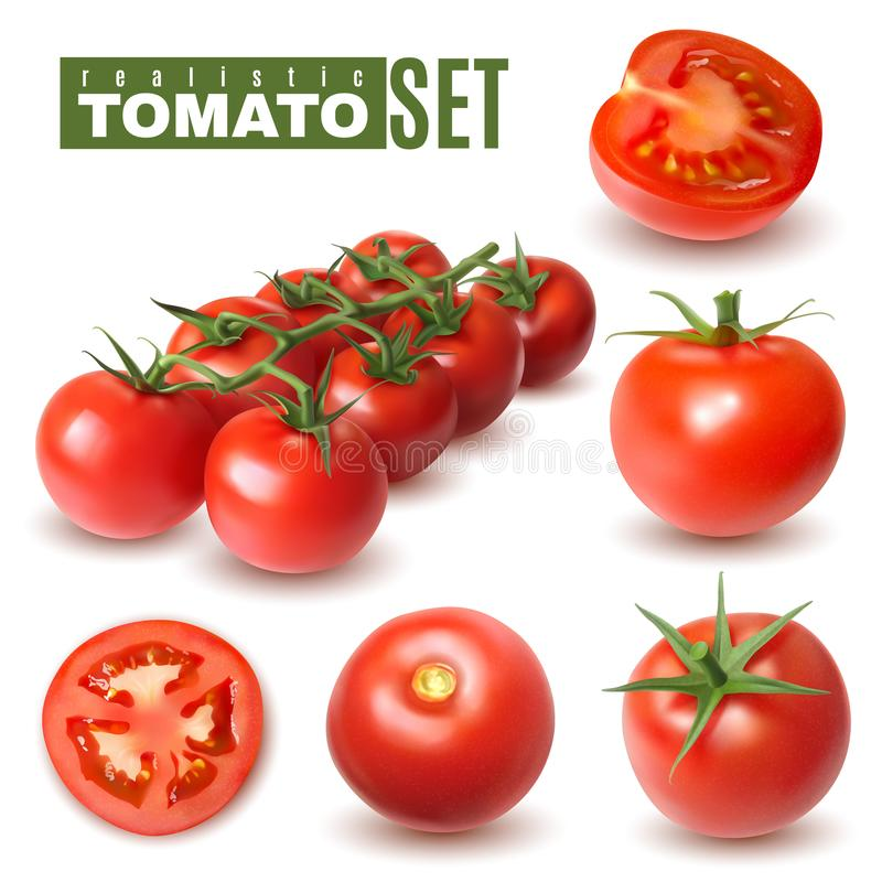 Realistic Tomato Fruits Collection. Realistic tomato set of isolated images with single tomato fruits and groups with shadows and text vector illustration vector illustration
