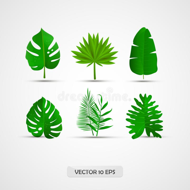 Realistic tropical leaves set: palm leaves, jungle leaves, split leaf. 3D, isolated. Vector royalty free illustration
