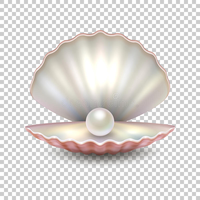 Realistic vector beautiful natural open sea pearl shell closeup isolated on transparent background. Design template. Clipart, icon or mockup, EPS10 vector illustration