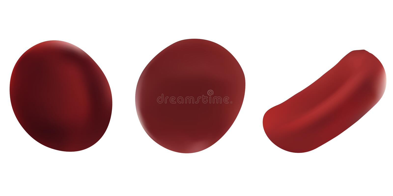 Realistic vector illustrations set red blood cell. Scientific concept. Red blood cells isolated on white background stock illustration