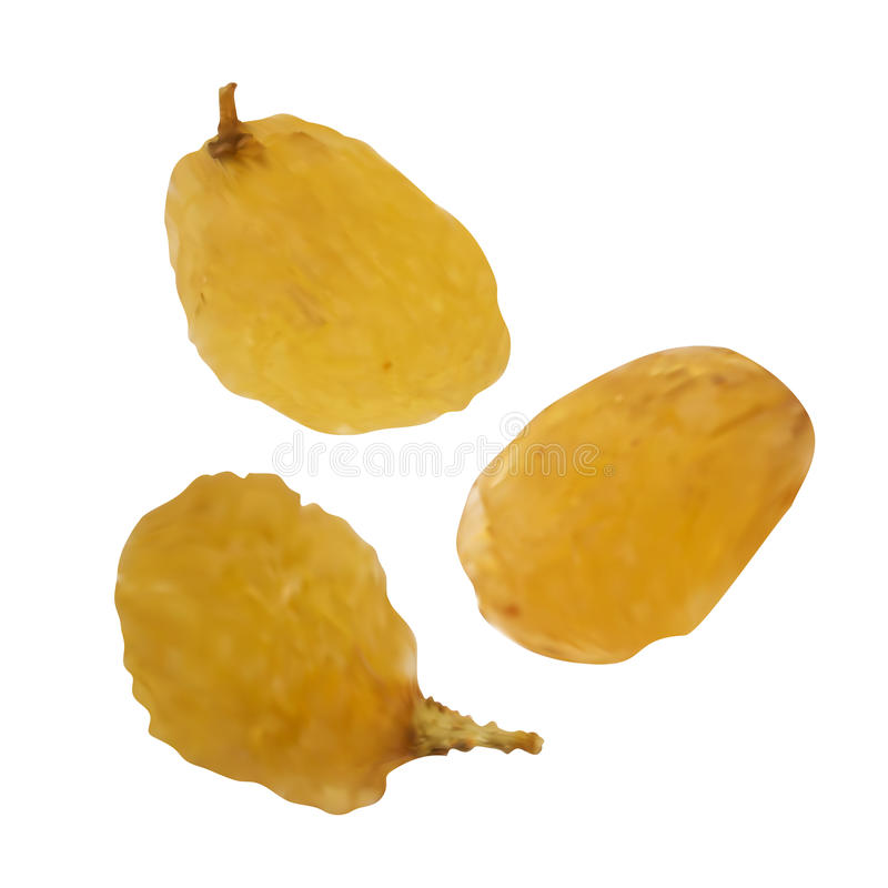 Realistic Vector Raisins on White Background. Realistic Vector Raisins Isolated on White Background. Golden Dried Seedless Grapes Top View royalty free illustration