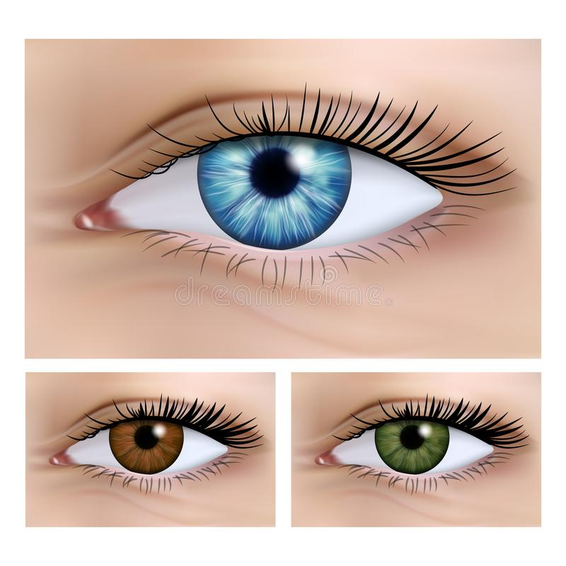 Realistic vector set of human female eyes close-up. vector illustration