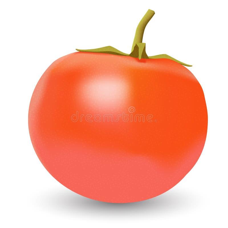 Realistic vector tomato. Realistic vector big ripe red fresh tomato on white background stock illustration