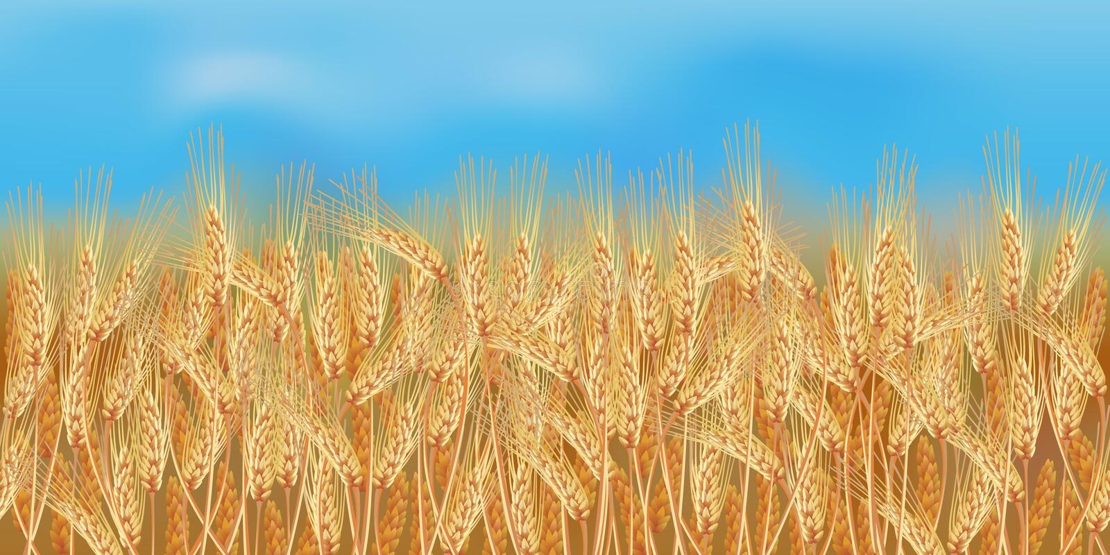 Horizontal seamless wheat field with the blue sky stock illustration