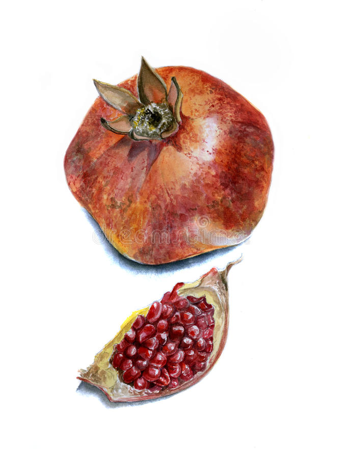 Realistic watercolor sketch of the pomegranate, separate the slice stock photos