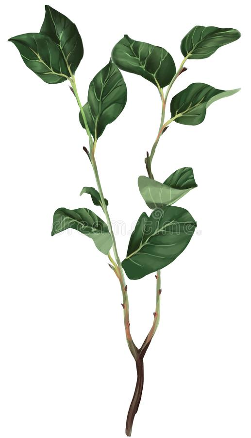 Realistisch beeld van een tak met bladeren royalty-vrije illustratie