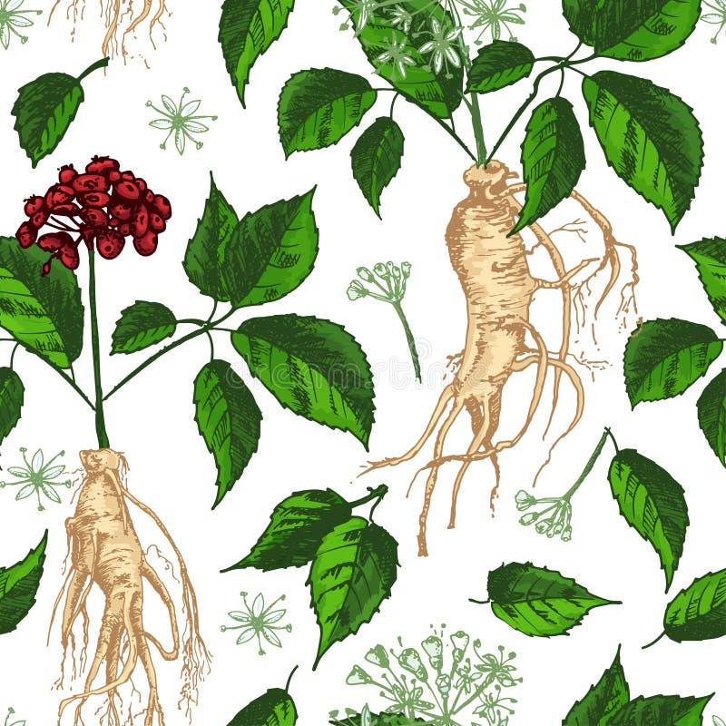 Realistisch Botanisch naadloos die de kleurenpatroon van de inktschets met ginsengwortel, bloemen en bessen op wit wordt geïsolee royalty-vrije illustratie